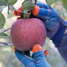 찬서리맞은 사과 5kg